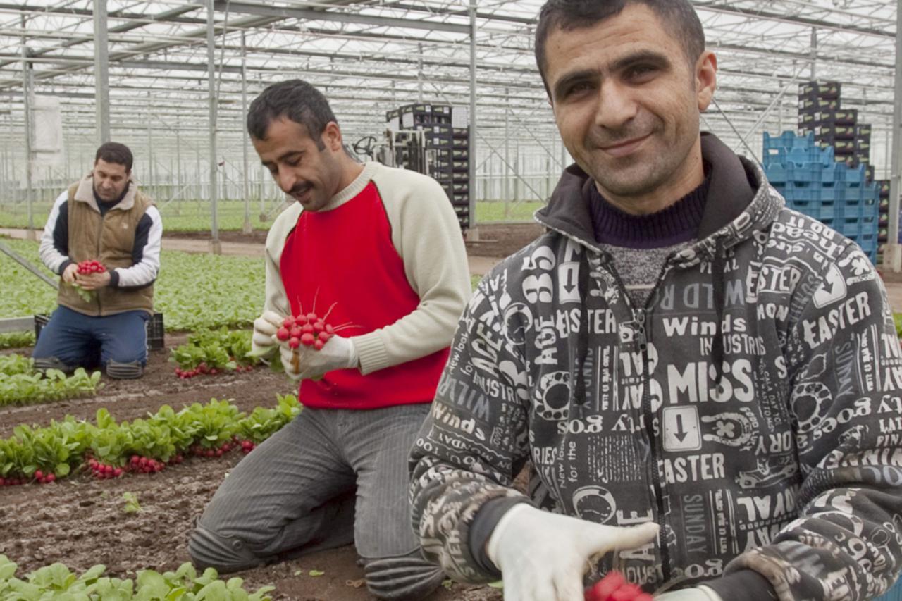 Europa ondersteunt migranten van buiten de Europese Unie bij het vinden van werk